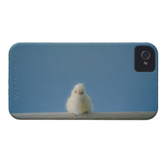Lone Baby Pet Chicken Sitting on a Perch iPhone 4 Cover