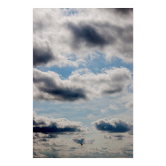 lone bird flying in the sky poster