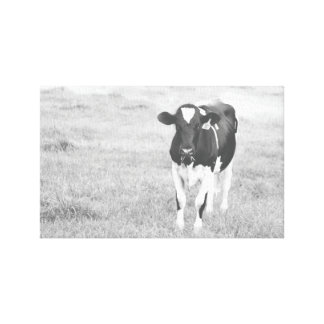 Lone Cow in a field on foggy day Canvas Print