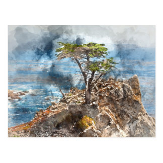Lone Cypress in Monterey California Postcard