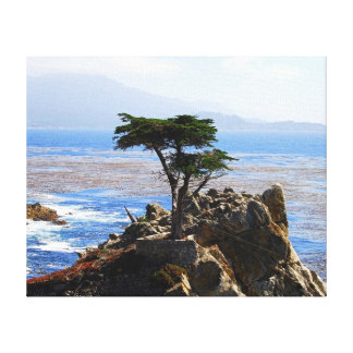 Lone Cypress, Monterey, California Gallery Wrapped Canvas