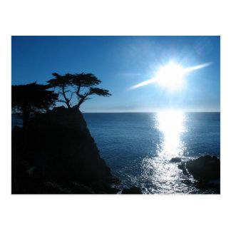 Lone Cypress Postcard