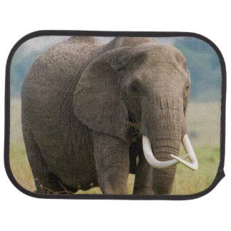 Lone Elephant (Loxodonta Africana) Feeds Car Mat