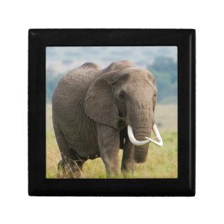 Lone Elephant (Loxodonta Africana) Feeds Gift Box