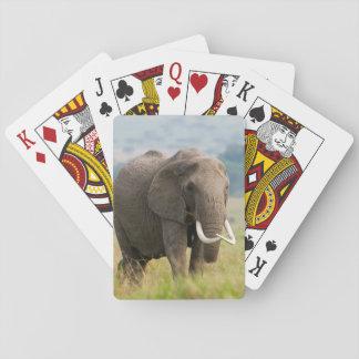 Lone Elephant (Loxodonta Africana) Feeds Playing Cards