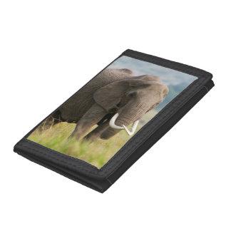 Lone Elephant (Loxodonta Africana) Feeds Tri-fold Wallet
