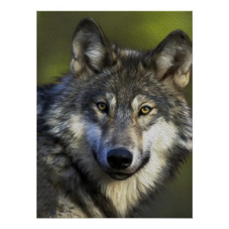 Lone Grey Wolf Posters