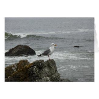 Lone gull greeting card