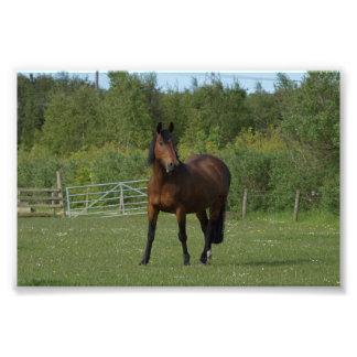 Lone Horse Photo Print
