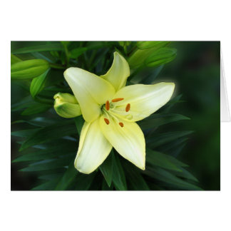 Lone Lily Greeting Card