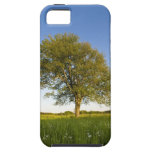 Lone maple tree in hay field at Raymond Farm, iPhone 5 Cover