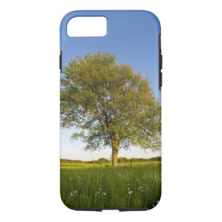 Lone maple tree in hay field at Raymond Farm, iPhone 8/7 Case