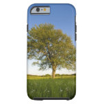 Lone maple tree in hay field at Raymond Farm, Tough iPhone 6 Case