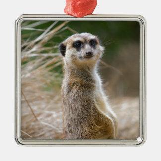 Lone Meerkat Christmas Ornament