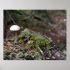 Lone Mushroom Poster