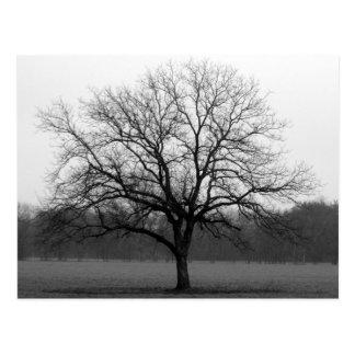 Lone Oak Postcard