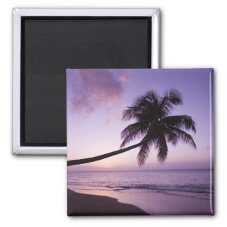 Lone palm tree at sunset, Coconut Grove beach 2 Fridge Magnet