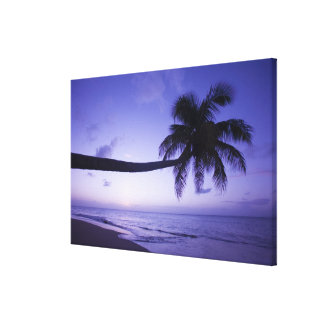 Lone palm tree at sunset, Coconut Grove beach 3 Canvas Print