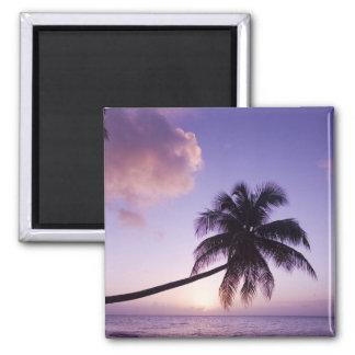 Lone palm tree at sunset, Coconut Grove beach Refrigerator Magnet