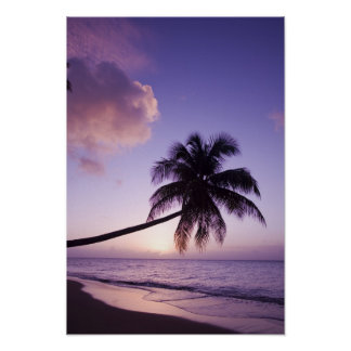Lone palm tree at sunset, Coconut Grove beach Poster
