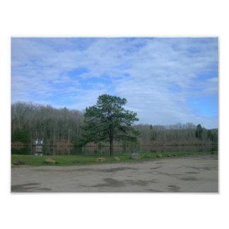 Lone Pine Photo
