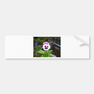Lone Purple and White Pansy Bumper Stickers