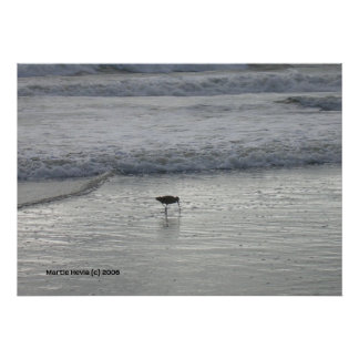 Lone Sandpiper at Watsonville Beach Posters