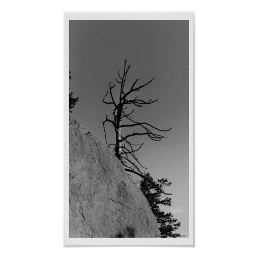 Lone Sky Tree, digital photo by Mark Easton