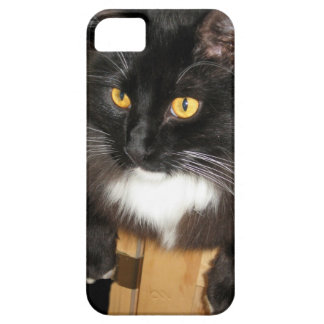 Lone Star Cat Perching on a Table, photograph Case For The iPhone 5