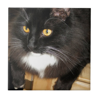 Lone Star Cat Perching on a Table, photograph Small Square Tile