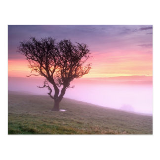 Lone tree and pink misty sunrise - Cumbria Postcard