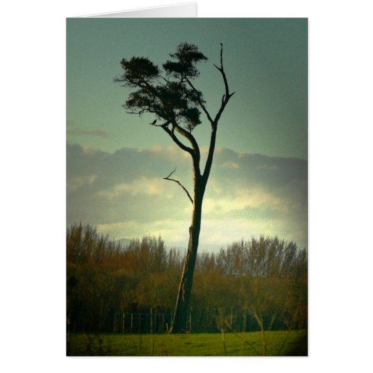 Lone Tree Card
