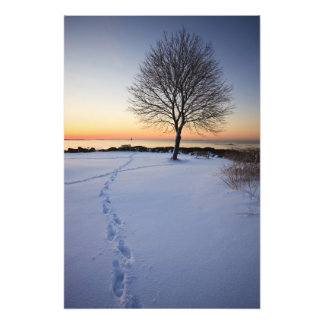 Lone tree in fresh snow at New Castle Common Photo Print