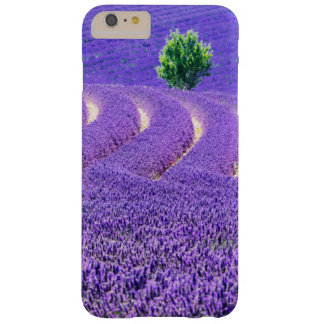 Lone tree in Lavender Field, France Barely There iPhone 6 Plus Case