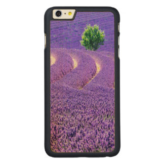 Lone tree in Lavender Field, France Carved Maple iPhone 6 Plus Case