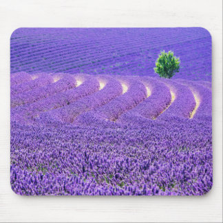 Lone tree in Lavender Field, France Mouse Mat