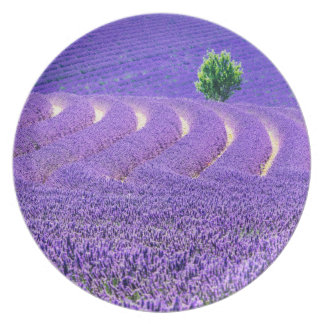 Lone tree in Lavender Field, France Plate
