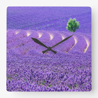 Lone tree in Lavender Field, France Square Wall Clock