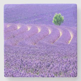 Lone tree in Lavender Field, France Stone Coaster