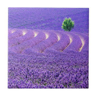 Lone tree in Lavender Field, France Tile