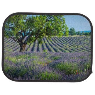 Lone tree in purple field of lavender car mat