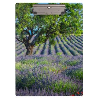 Lone tree in purple field of lavender clipboard