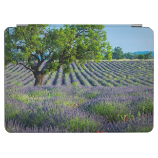 Lone tree in purple field of lavender iPad air cover