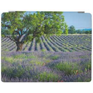 Lone tree in purple field of lavender iPad cover
