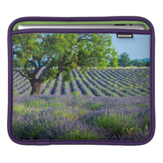 Lone tree in purple field of lavender iPad sleeve