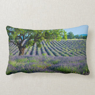 Lone tree in purple field of lavender lumbar cushion