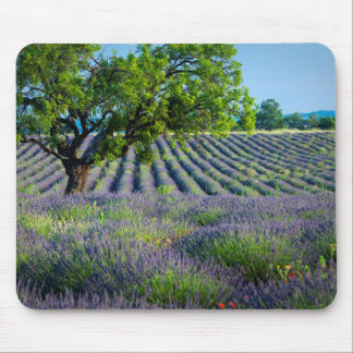 Lone tree in purple field of lavender mouse mat