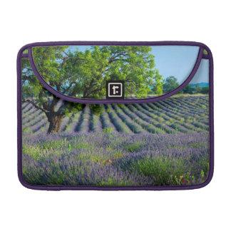 Lone tree in purple field of lavender sleeves for MacBook pro