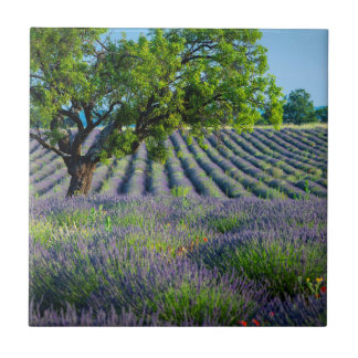 Lone tree in purple field of lavender tile