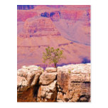 """""""Lone Tree on Canyon Ridge"""" collection Post Card"""